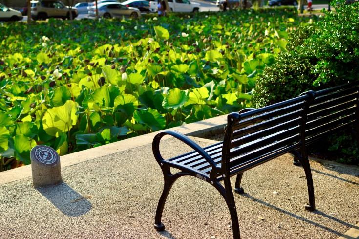 Bench at Park.jpg